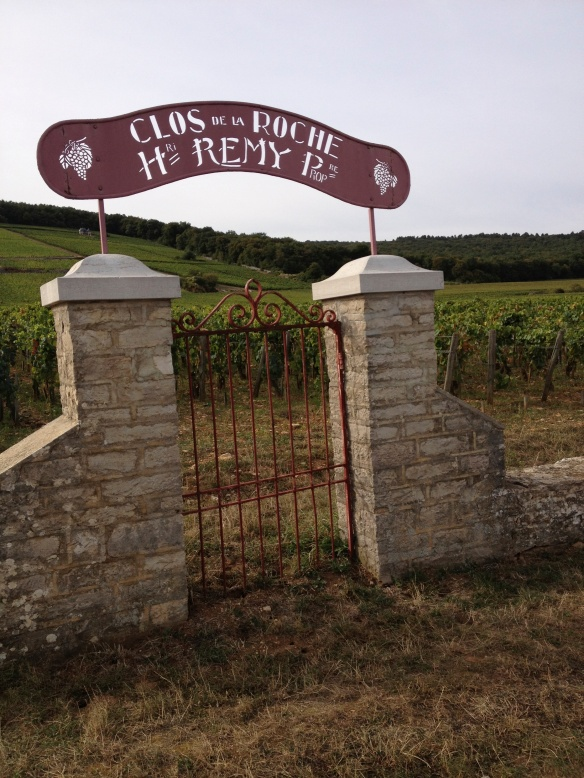 Clos de la Roche Grand Cru vineyard just north of Morey-Saint-Denis in Cote de Nuits, right next to Ray Walker's Les Chaffots.