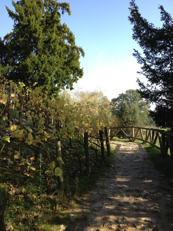 A rustic bridge alongside some grapevines near Le Rocher