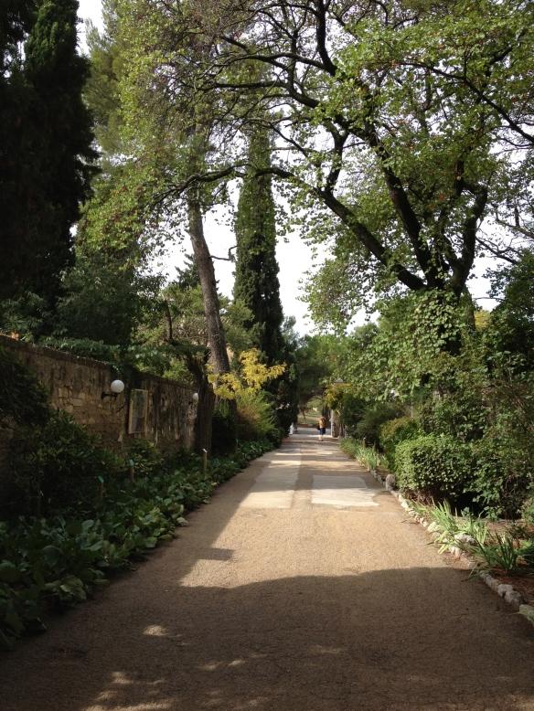 The lovely walk up to St-Paul-de-Mausole